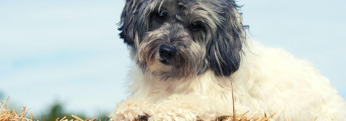 Futtermilben Hund