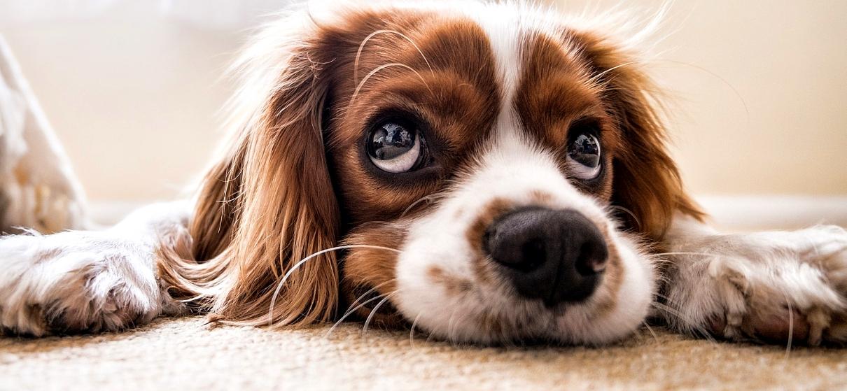 Hund mag keine Kauartikel