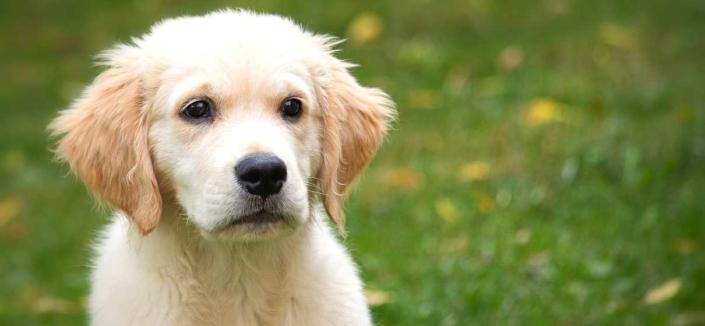 Fellwechsel beim Hund